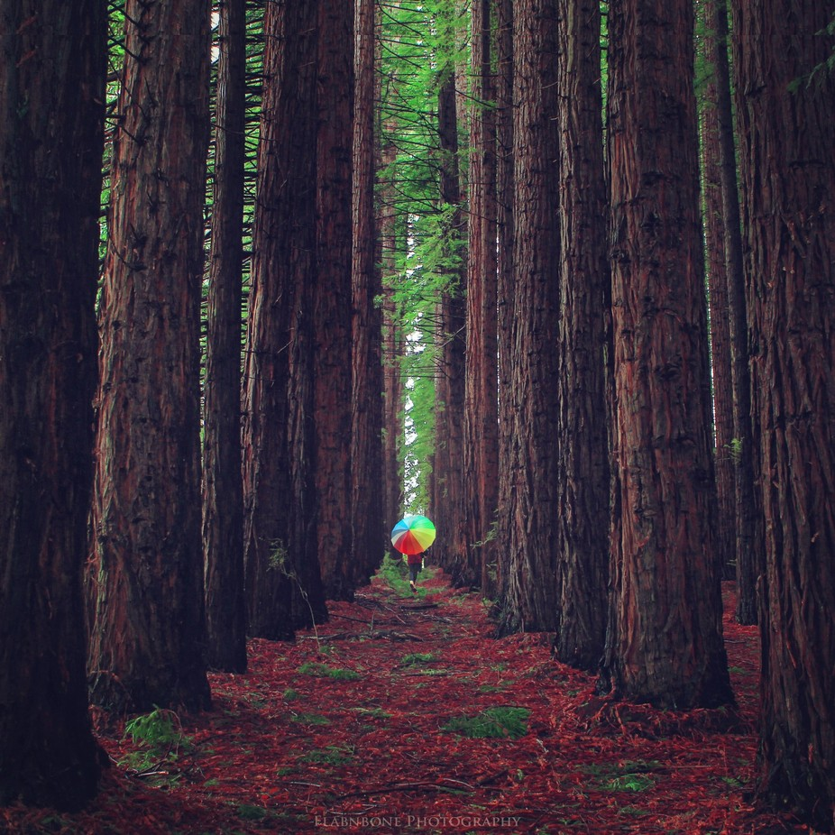 The Forest Path by Flabnbone - Life And Freedom Photo Contest