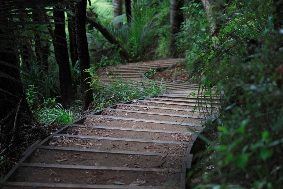 A serpentine path through the bush near Piha on the West Coast of New Zealand's North Is...