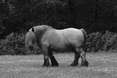 IMG_20080713_0766 a HORSE!