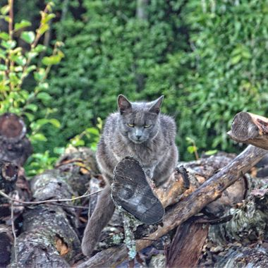 I took this photo when we were in Timra, Sweden in 2015.  While we were visiting friends, we decided to walk in the countryside and suddenly we saw this cat sitting on a pile of wood looking at us.