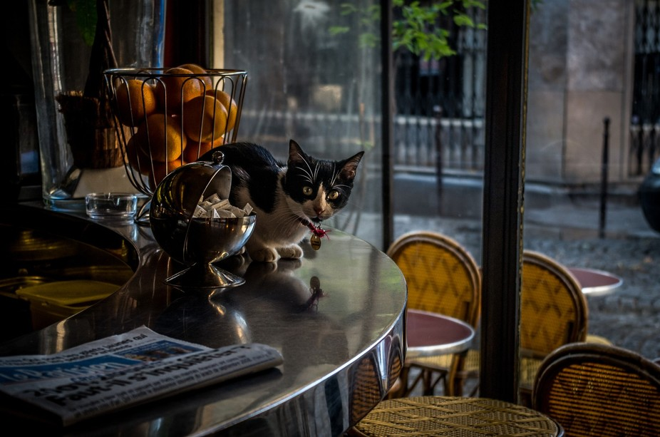 While drinking a coffee in a little bar in Paris: The cat always jumps on the counter when the &a...
