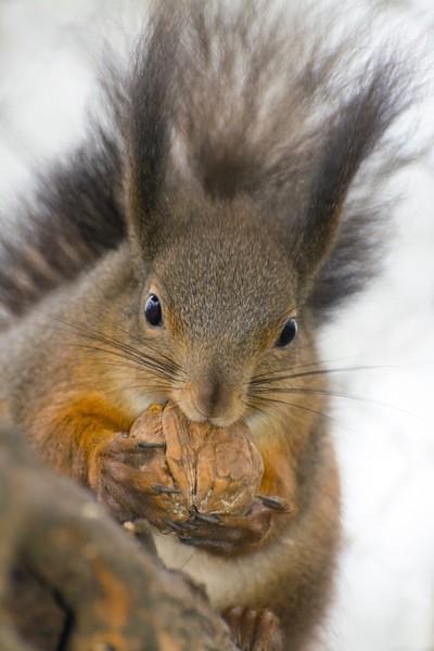 Squirrel Diet