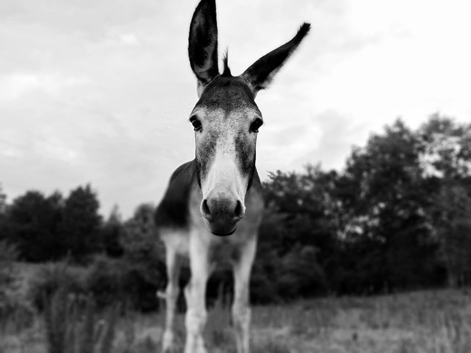 I loved this donkey, he was so nice and he let me take this picture. This is my first photo on vi...