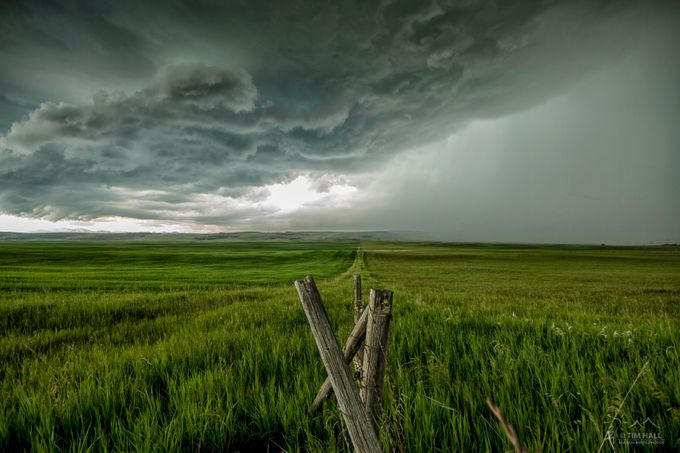 Grass is always Greener on the other side by Tim-Hall - In the Center Photo Contest