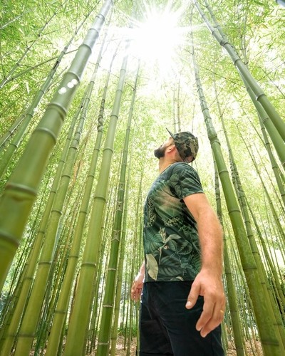 Trsteno Bamboo