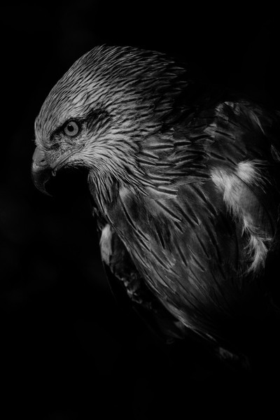 Black hawk up