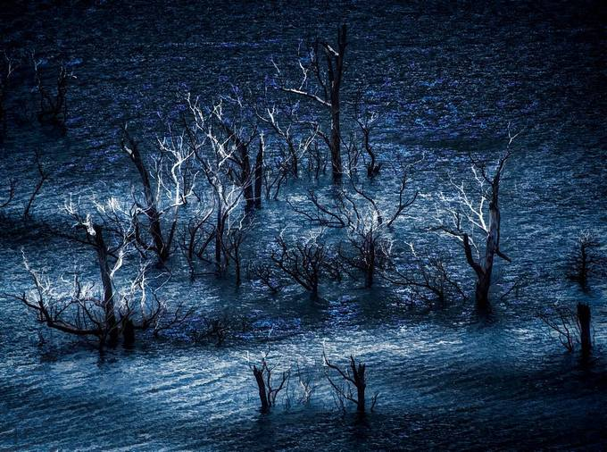 As the water resides from the dam a dead forgotten forest appears.