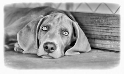 Jay a black & White Portrait