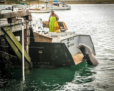 MORRO BAY FISHERMAN & SEAL_1696