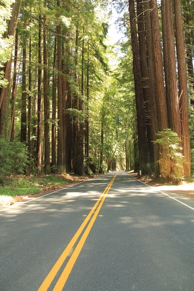 AVENUE OF THE GIANTS ROAD TO NO WHERE IMG_2086