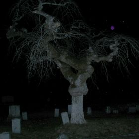 My husband and I were ghost hunting in a cemetery and I had always wanted to take night photos of this really interesting tree. It's beautif...