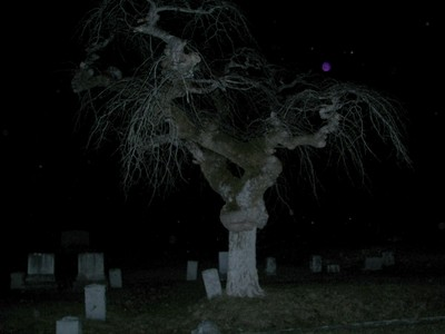 Twisty Tree in a cemetery