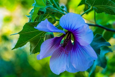 flower3 (1 of 1)