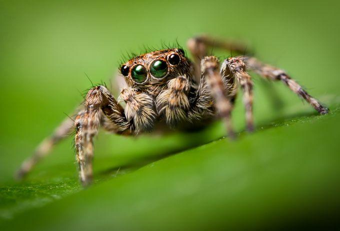 Little Jumper by MatthewKou - Shallow Depth Of Field Photo Contest