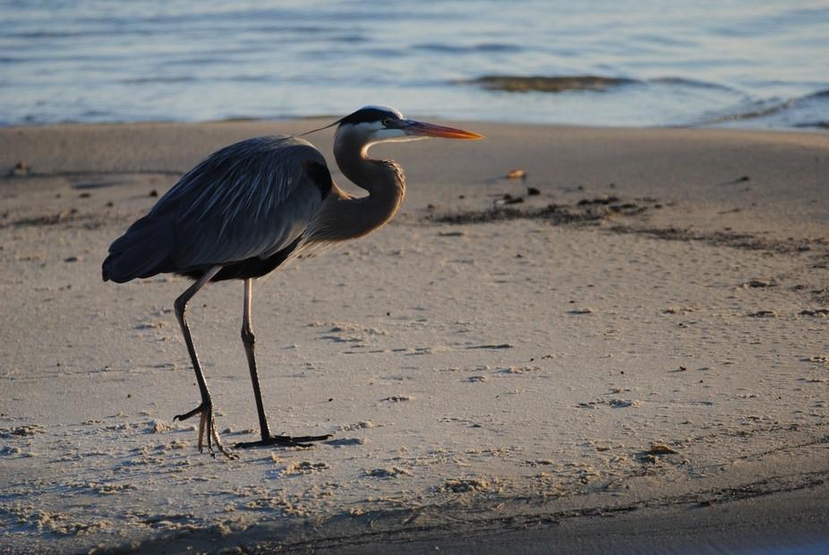 Beach strolling