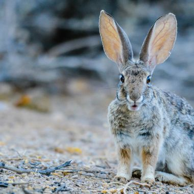 I love the expression on this little Cottontails face, so cute!
