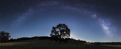 California Oak & Milkyway