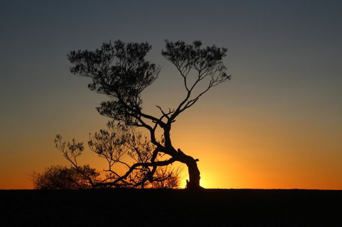 IMG_27297-2 Backlit tree 2 by JHancock - Silhouettes Of Trees Photo Contest