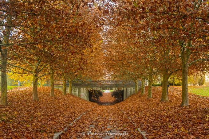 Parco Urbano by AntonioMarchetti - Monthly Pro Vol 24 Photo Contest