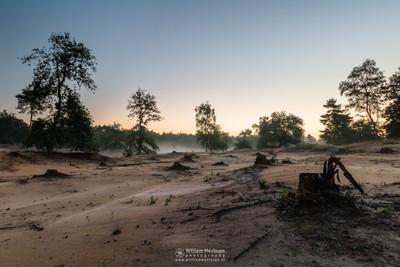 Misty Twilight Boshuizerbergen