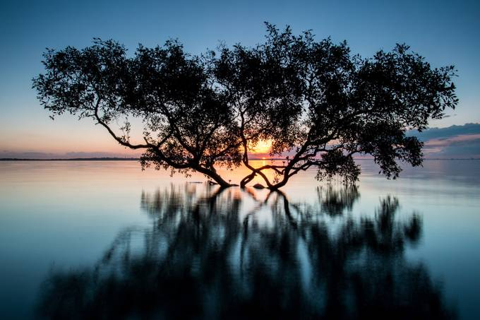 Rising Fast by robwarrender - Silhouettes Of Trees Photo Contest