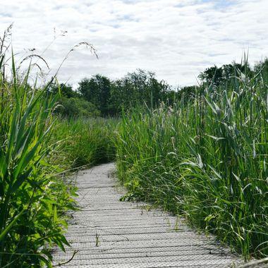 Boardwalk on Southrepps Nature Reserve, Norfolk, UK.