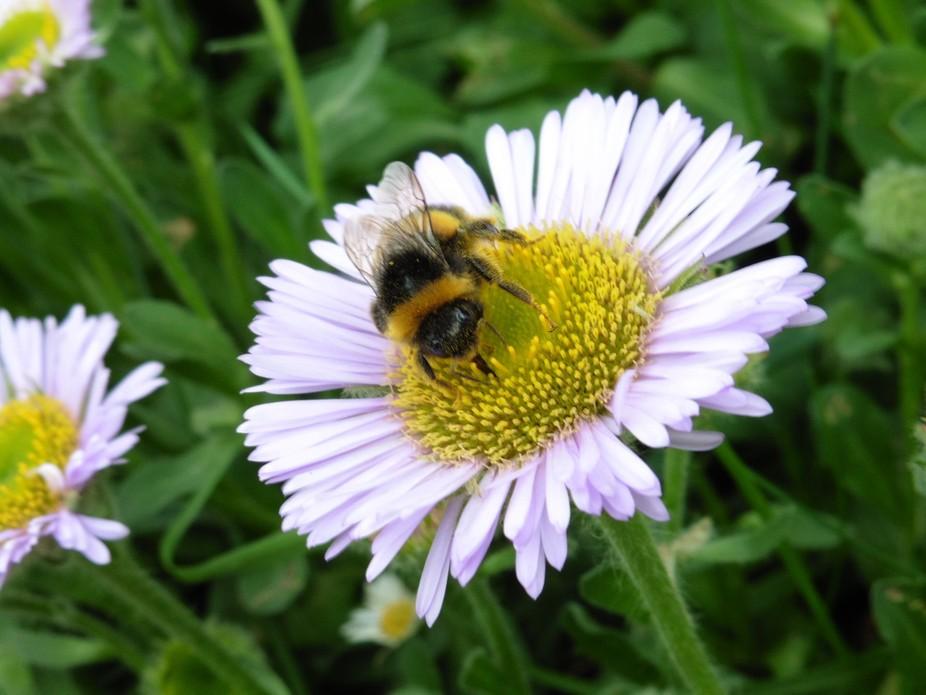 Bee looking at camera