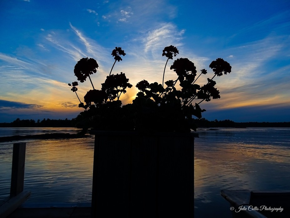 Silhouette of potted Geraniums at the end of the dock at sunset.  Taken in Muskoka, Ontario, Cana...