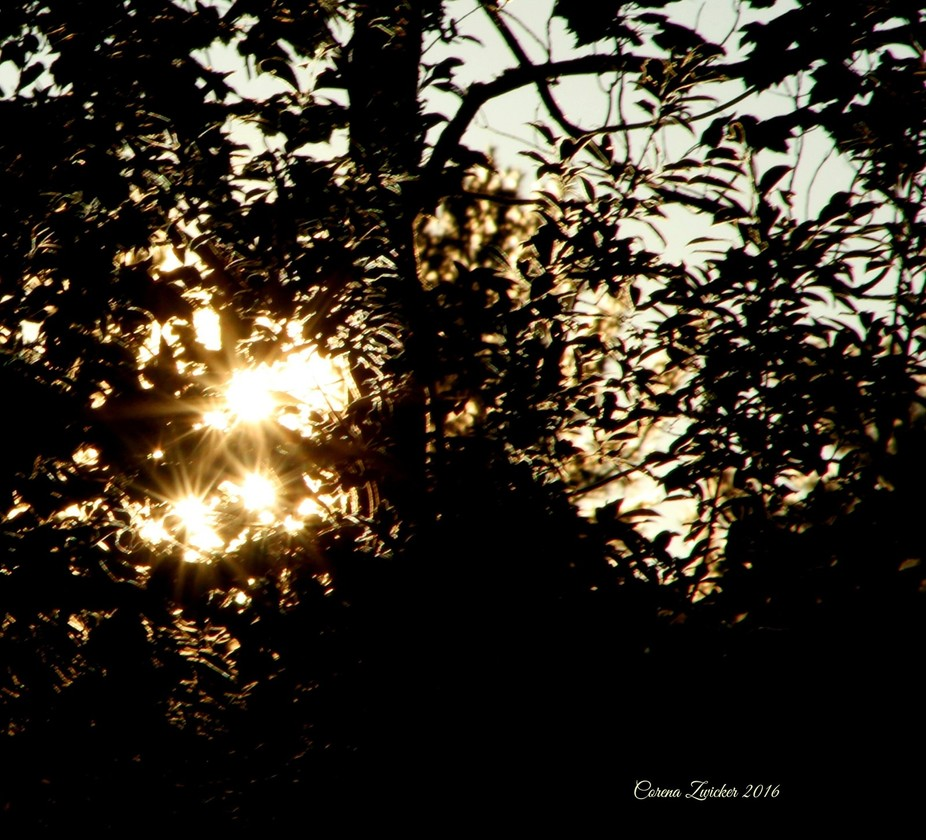 As the sun was setting behind the trees.