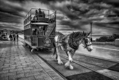 Victor Harbour Horse Drawn Tram_0461 B&W