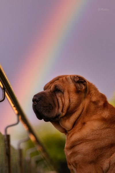 Dreaming of a Rainbow...