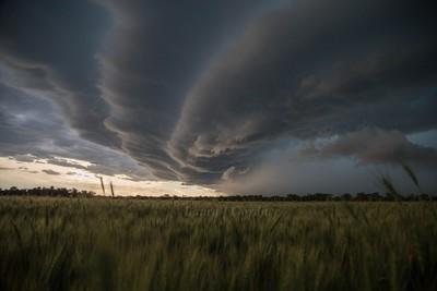 Wheat vs Weather
