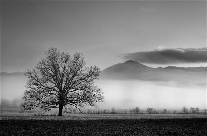 Morning Fog by mjkirkland - A Lonely Tree Photo Contest