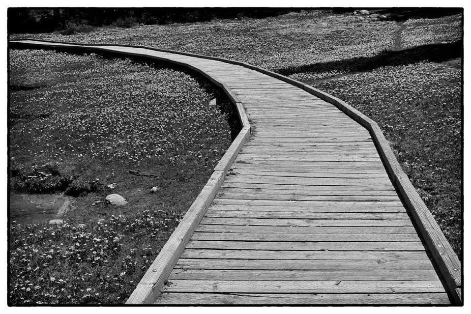 Mirror Lake Boardwalk