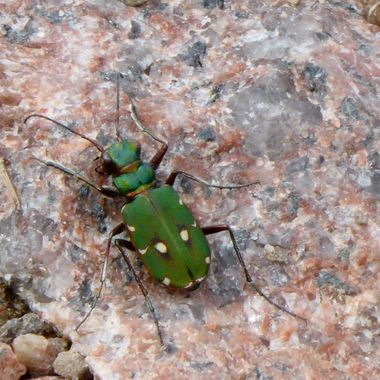 A Funny wee Flying Green Beatle