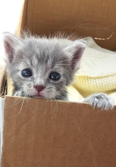 Tiny Emmett