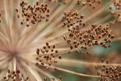 Kaleidoscope of seeds