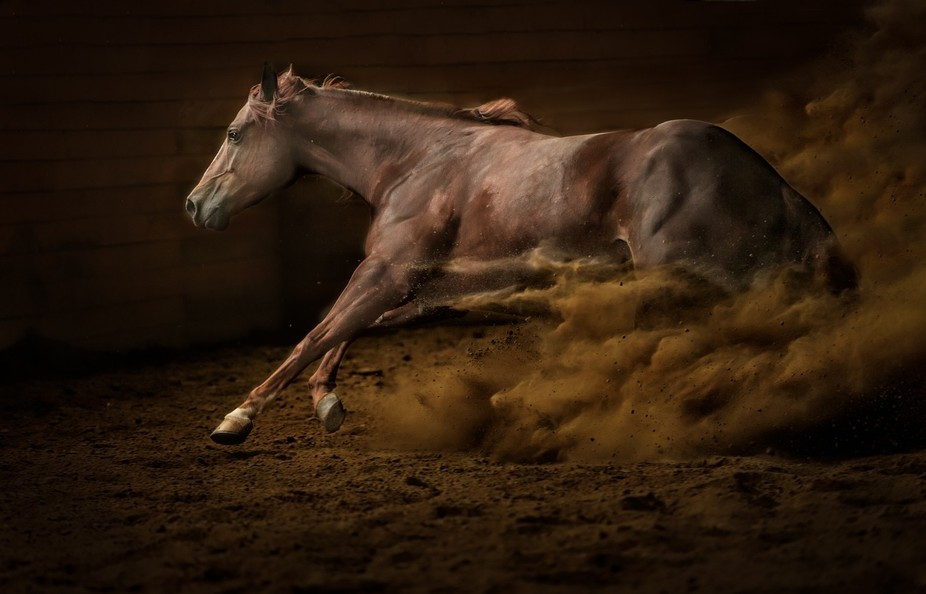 This is a picture of a reining horse playing in an indoor arena.