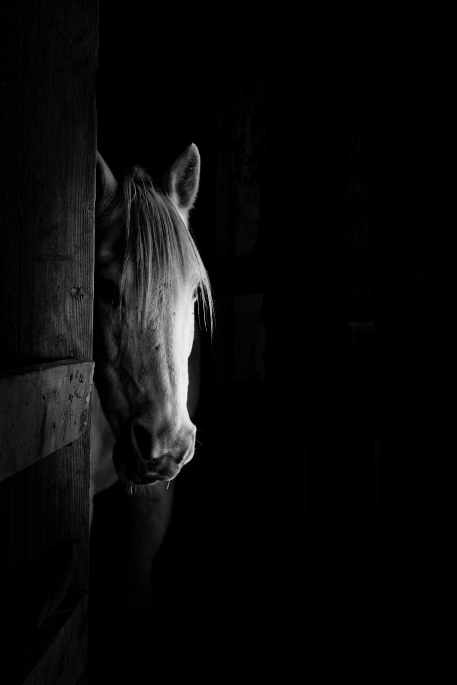 Shy by Thomas_T - Black And White Compositions Photo Contest vol3