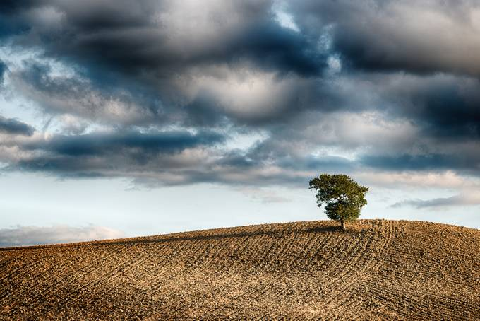 Tree by giovannivolpe - The Brown Color Photo Contest