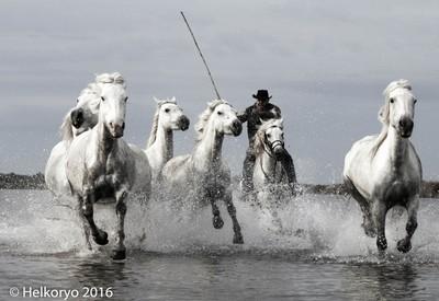 Chasing the Wild White horses