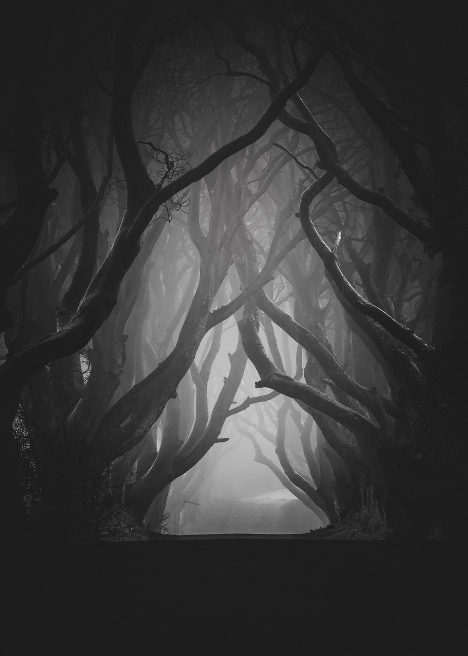 The Dark Hedges by pawelklarecki - Black And White Landscapes Photo Contest