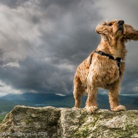 My Bob showing who's boss in Snowdonia, Wales.