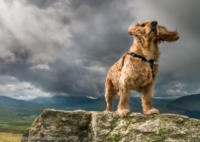 The dog god