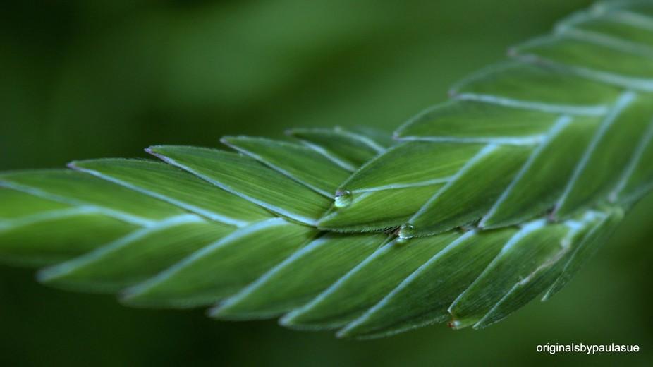 Flat Grass Seed