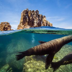 Seals in Los Islotes. Baja California Sur.