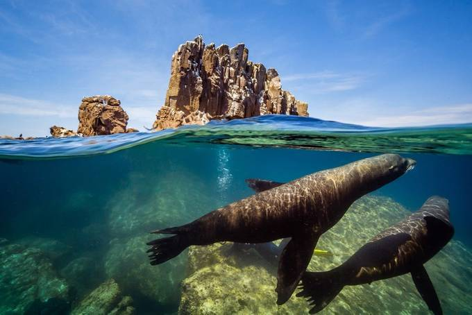 Seals (split) by carlosgrillo - The Ocean Photo Contest