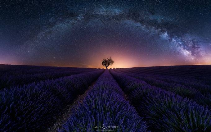 Purple Arch  by dustpixxByFabioAntenore - A Lonely Tree Photo Contest
