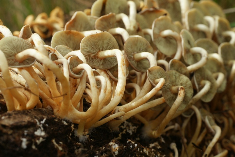 Fungi on over turned tree.