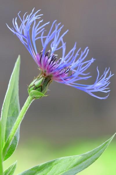 Backyard exotic flower